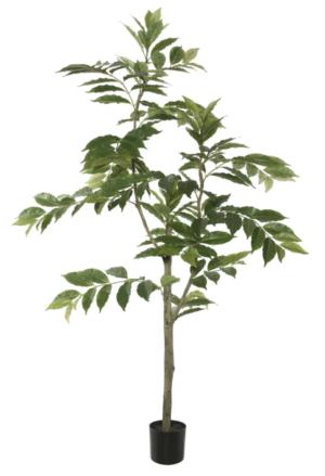 Wayfair Nandina Foliage Tree in Pot