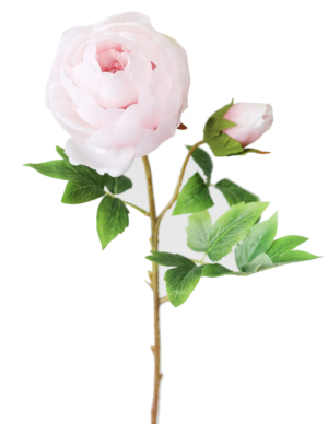 AFloral Silk Peony in Light Pink – 24″ Tall