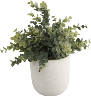 Wayfair Texture Eucalyptus Plant in Planter